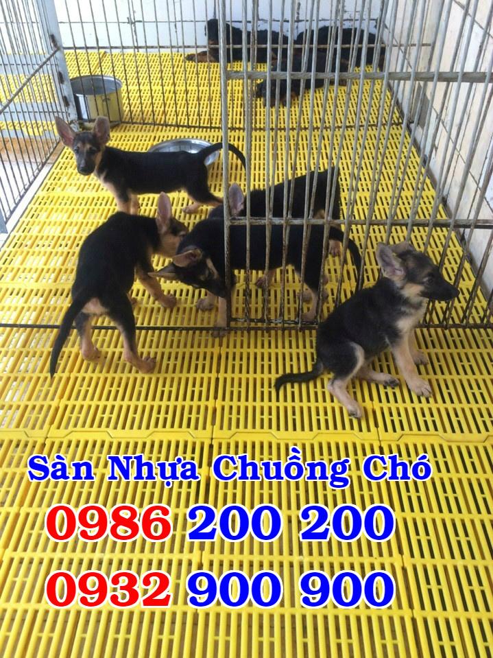 HCM-VT : Bán tấm nhựa lót sàn chuồng chó, mèo, heo, dê - 0986200200 - 6