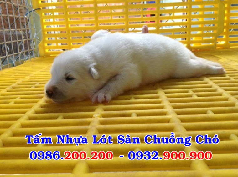 HCM-VT : Bán tấm nhựa lót sàn chuồng chó, mèo, heo, dê - 0986200200 - 5