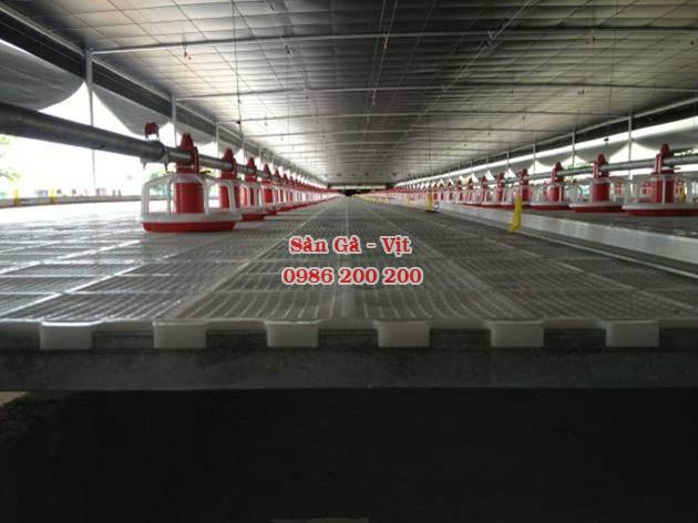 sàn gà, lưới lót gà, sàn nuôi gà, sàn gà thịt, sàn nhựa nuôi gà, 0986200200, tấm lót sàn gà (3)