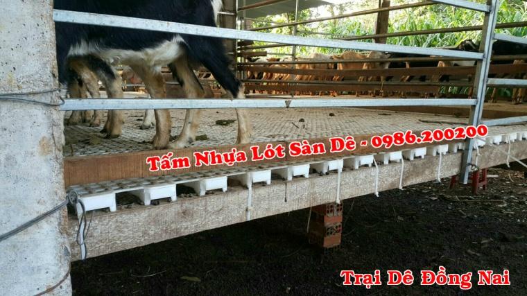 sàn dê, tấm lót sàn dê, tấm nhựa lót sàn dê, sàn nuôi dê, 0986 (1)