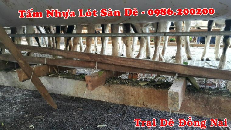 sàn dê, tấm lót sàn dê, tấm nhựa lót sàn dê, sàn nuôi dê, 0986 (3)