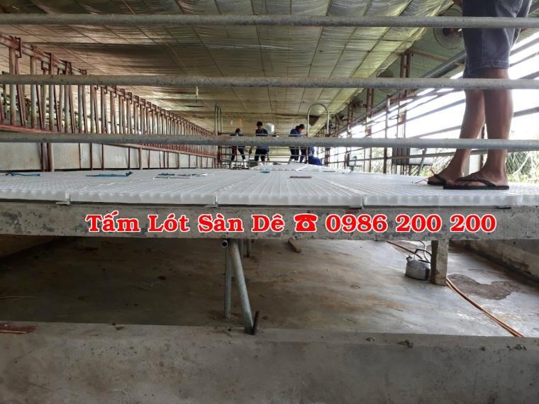 sàn dê, tấm lót sàn dê, bán sàn dê, sàn dê, chuồng trại dê, tấm nhựa lót chuồng dê (2)