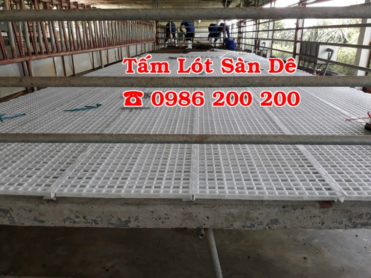 sàn dê, tấm lót sàn dê, bán sàn dê, sàn dê, chuồng trại dê, tấm nhựa lót chuồng dê (3)