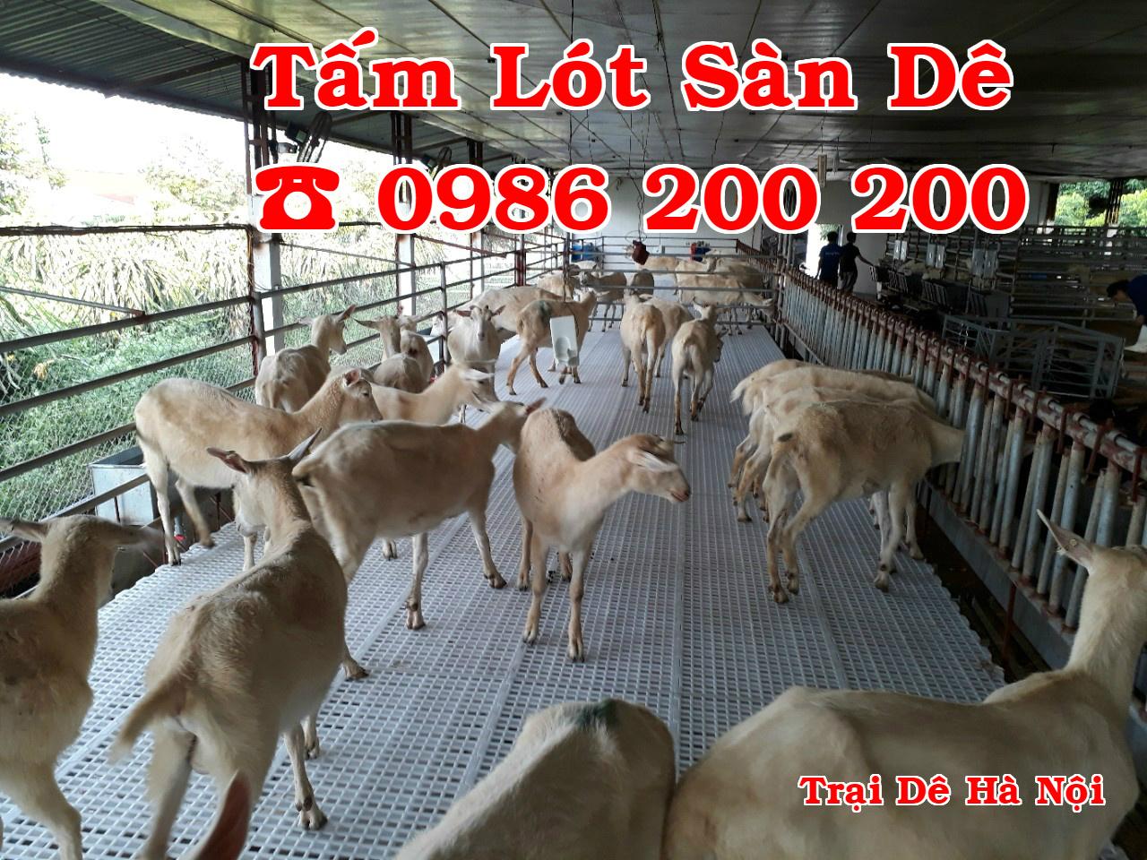 HCM-VT : Bán tấm nhựa lót sàn chuồng chó, mèo, heo, dê - 0986200200 - 21