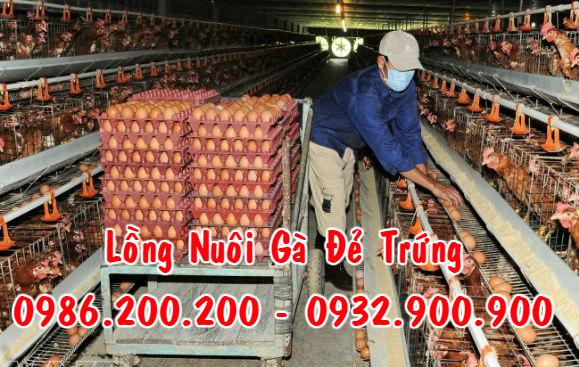 LỒNG NUÔI GÀ ĐẺ TRỨNG / 0986200200 -0932900900, Thiết bị nuôi gà đẻ trứng, Kỹ thuật làm chuồng nuôi gà đẻ trứng,lỒNG GÀ ĐẺ TRỨNG CÔNG NGHIỆP